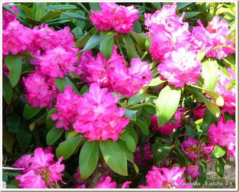 Le jardin de PassionNature78 (33)