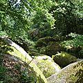 14 En forêt