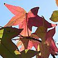 Transparenes: feuilles