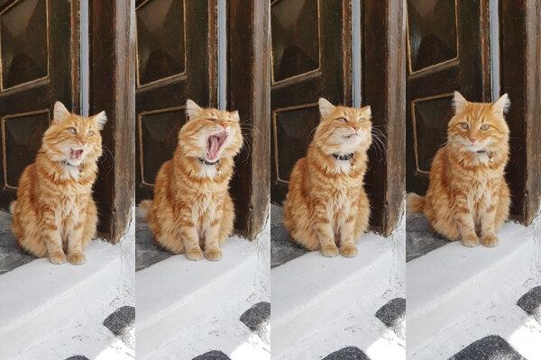 111111 chat roux