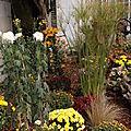 Superbes chrysanthèmes diversité de mauves