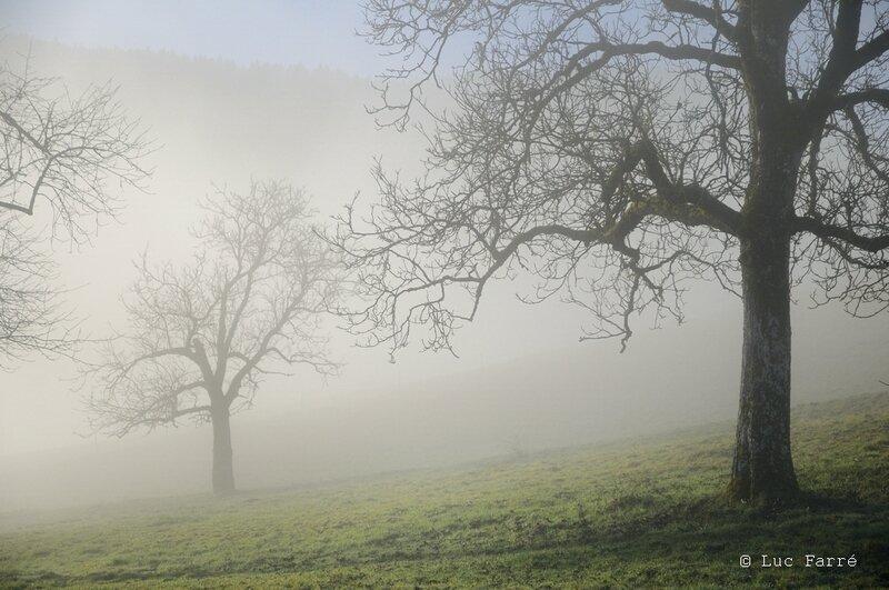 arbre bauge 02
