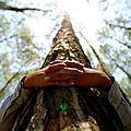 La sylvothérapie : de l'intérêt d'enlacer des arbres