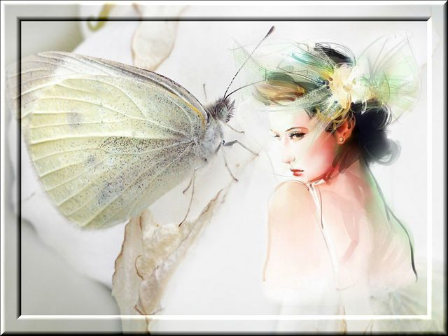 White_butterfly-image