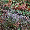Fleurs, feuilles, bruyère 111116