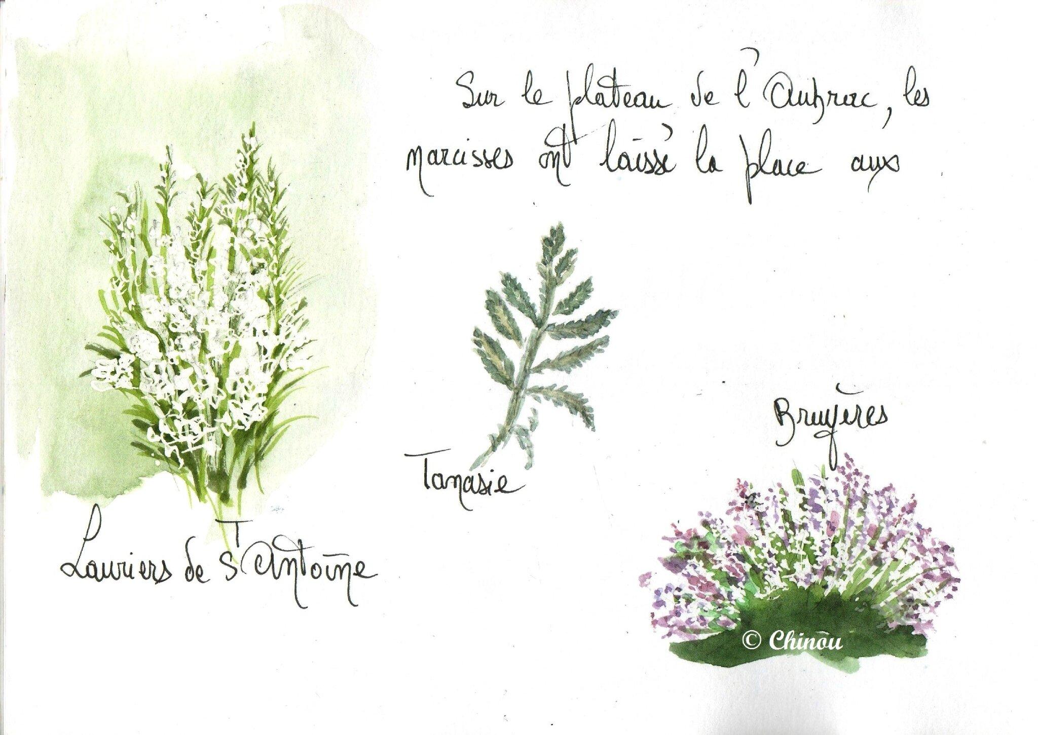 Flore de l'aubrac