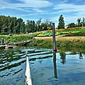 Sur la Garonne 26 septembre 2015 SANDRINE (14)