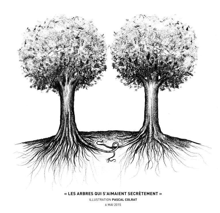 les_arbres_secret