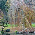 2011_11_15-POM-P1060448