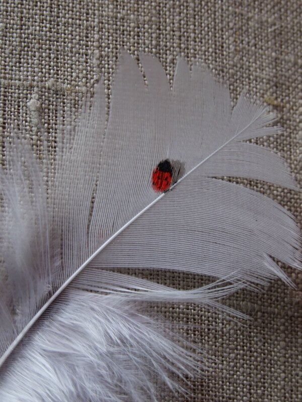 Coccinelle plume