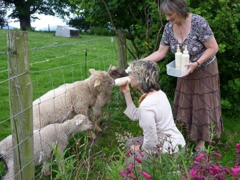 l'heure du repas thornbury farm