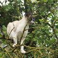 2008 06 16 Blanco dans un arbre