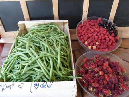 20-récolte du jour-haricots-muroises-framboises-mures (2)
