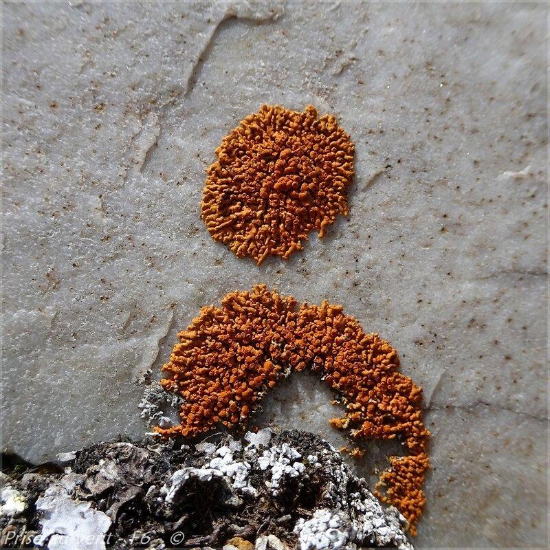 Gde Sassière - f - Lichens crustacés