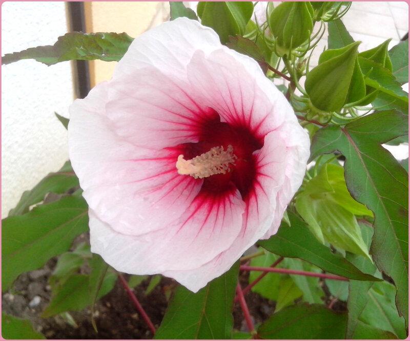 fleursteph