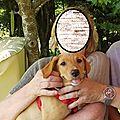 Ossette dans les bras de ses adoptants 3