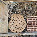 54 ECLOSION des OSMIES (hôtel à insectes)