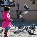 Dans le grand temple, fascination pour les pigeons