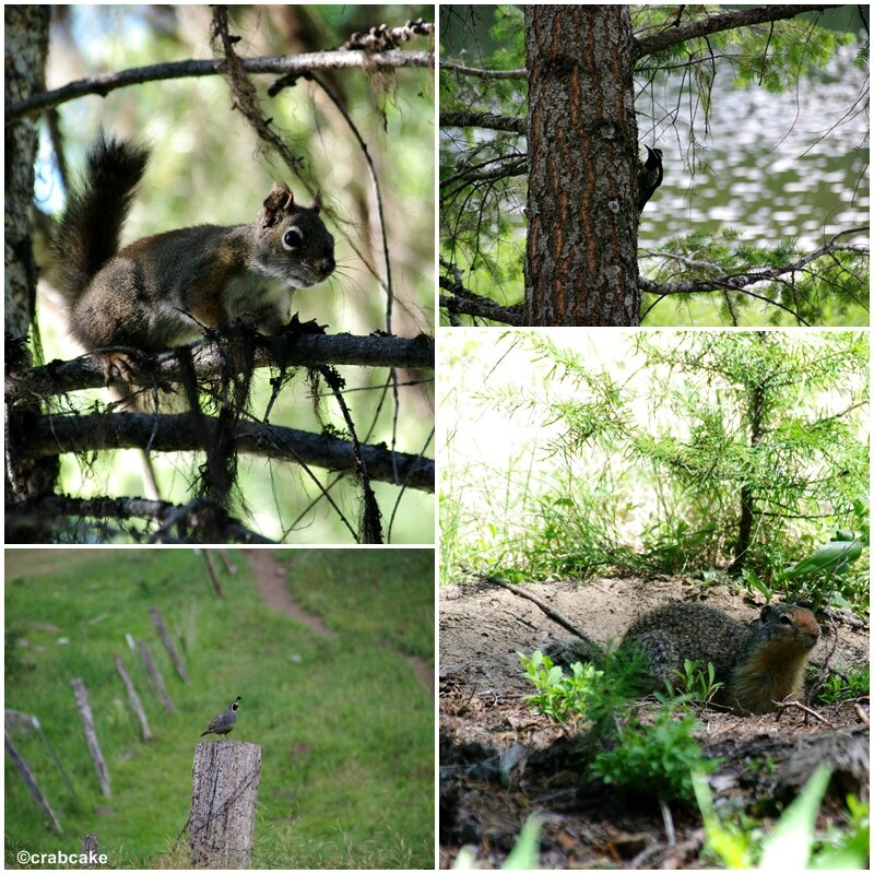 Wild animals in Wenatchee National Forest