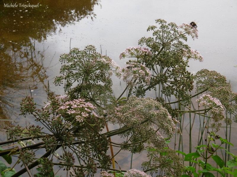 1-Balade au Lac 050819