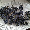 Raisins du jardin