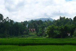 Sulawesi 093