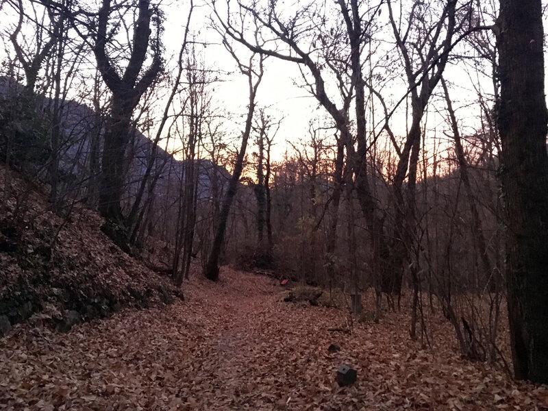 Forêt entre Tesserete et Sonvico