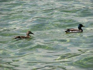 canards_rs