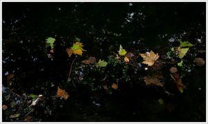 feuilles_couleurs_eau_QM_240908