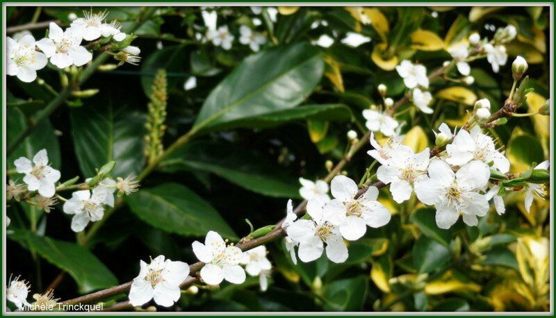 Fleurs blanches 140315