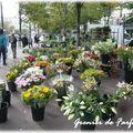 523 - couleurs d'automne ... marché aux fleurs !!!