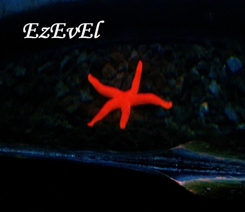 EzEvEl sea life stras 2