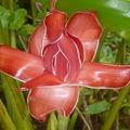 Jorge amado, langue fleurie