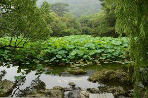 3 juillet Takamatsu Ritsurin 074
