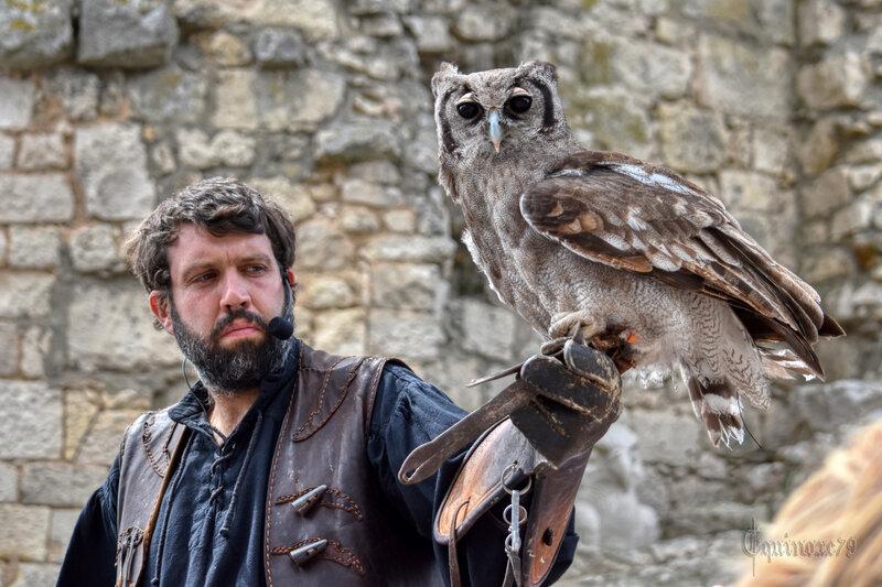 De la chasse au vol des seigneurs à la vénerie dans le Poitou - Voyage dans le temps et aperçu Historique de la Fauconnerie (8)