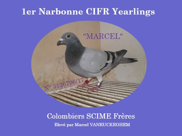 1er Narbonne Yearlings SCIME