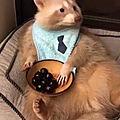 Un raton gourmand? ben voyons!!!