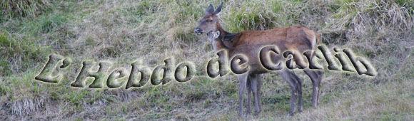 Hebdo_de_Carine_copie