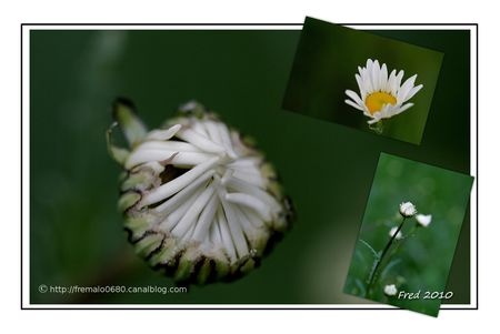 marguerite_sign_e