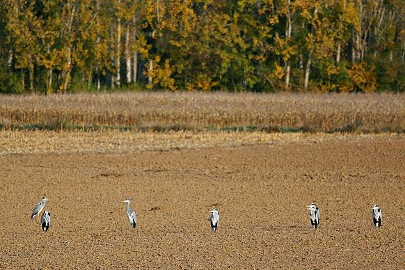 2009_10_27_Cand__sur_Beuvron_8436b_v