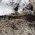 Archéologie nordique