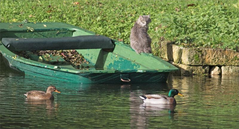 Bateau chat oiseaux canards 2 291020