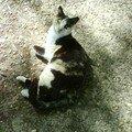 قطــة من شــالة من الرباط