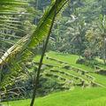 Bali lolo 2008 304