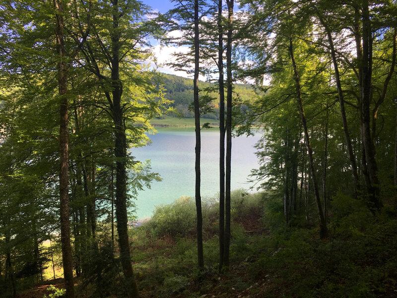 Entre lac et arbres