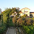 Windows-Live-Writer/Jardin_10232/DSCN0744