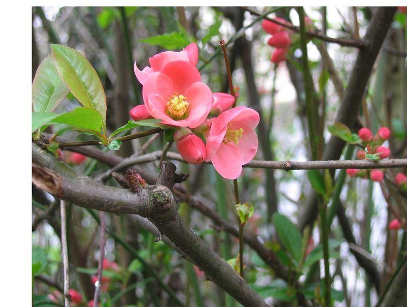 fleur brou