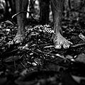 Le bois c'est la vie et la mort