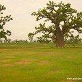A0116-baobabvert