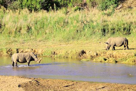 Rhinoc_ros_blancs__r_serve_d_Umfolozi__Afrique_du_Sud_b